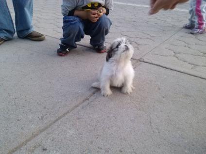 Mascota en Deportiva Chihuahua fotografía Rhafhaell
