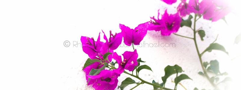 Vibrant en mi jardin por Rhafhaell