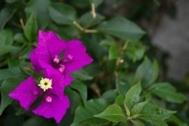 Primavera en mi jardín por Rhafhaell